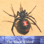 Review – The Black Widow